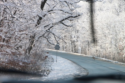 winter-curved-road